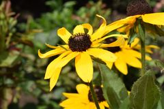 Very nice summer close up in my garden Royalty Free Stock Photo