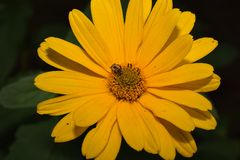 Very nice summer close up in my garden Stock Photo