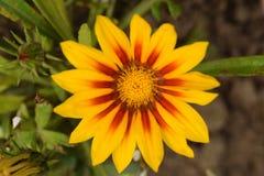 Very nice summer close up in my garden Stock Photos