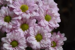 Very nice summer flowers in the unshine stock images