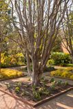 A Tree in a Beautiful Garden. This is a very nice tree in a well manicured garden that has a brick walkway Royalty Free Stock Photos