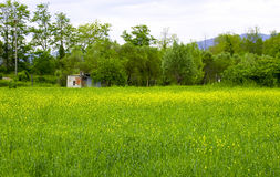 Very nice view of colza field Stock Photo