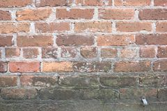 Old Dirty Brick Wall with Mildew and Mold Growing royalty free stock image