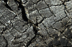 Very old cut of tree close up. Very old tree stump with cracks close-up Stock Images