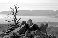 Old Tree Overlooking Palm Springs Royalty Free Stock Photography