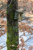 Very old nesting bird box covered in lichen and moss, hanging on a tree in spring Royalty Free Stock Images
