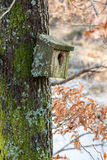 Very old nesting bird box covered in lichen and moss, hanging on a tree in spring Stock Photos