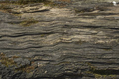 Very old oak board Stock Image