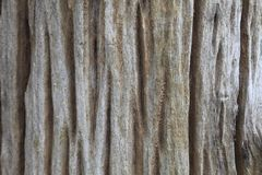 Very old piece of aging wood with deep natural crack texture for background design work stock photos