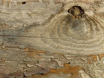 Very old plank of aged wood weathered by time and eaten by wood worms. Cracked wood board. Very old wood texture background. Orange grey khaki colour stock images
