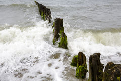 Very old and rotten wooden breakwaters Royalty Free Stock Photo