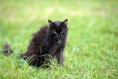 very old sick emaciated cat Stock Photo