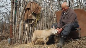 A very old sick man sits on a stool holding a goat in his hands, playing and feeding.