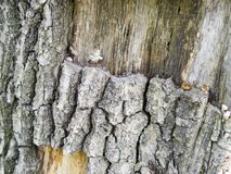 Very old silver wood bark texture royalty free stock image