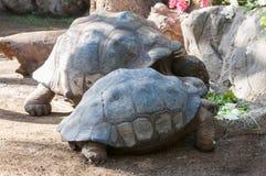 Very old tortoise Stock Photo