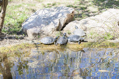 Very old tortoise Stock Image