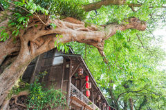 Very old tree amont chinese houses in Liujiang Stock Photos