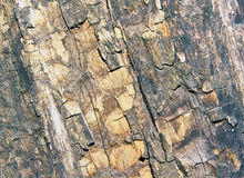 Very old tree bark Royalty Free Stock Images