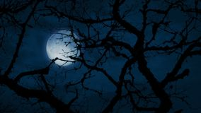 Moon Behind Ancient Gnarled Tree Branches. Very old tree in barren landscape in the wind late at night stock video footage