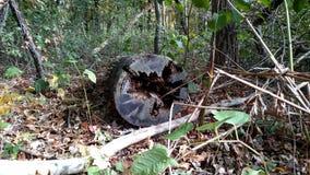 Very old tree. Old fallen tree Stock Photo