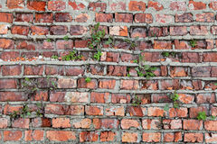 Very old wall Stock Images