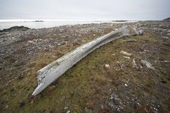 Very old whale bone (Arctic) Royalty Free Stock Photography