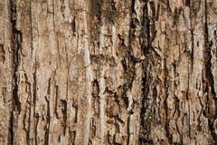 Very Old Wood Background. Very old wood as a texture background Stock Images