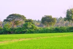 Peaceful View of a beautiful village from a Rice field in India stock photography