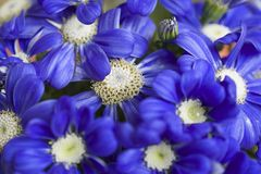 Very pretty blue flowers close up stock photo
