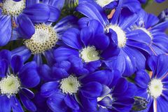 Very pretty blue flowers close up stock images