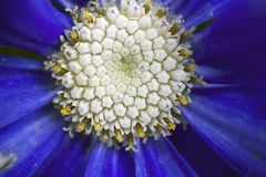Very pretty blue flowers close up royalty free stock photos
