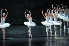 Very pretty and charming Swan-ballet Swan Lake Stock Image