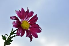 Nice colorful autumn flowers close up royalty free stock photo