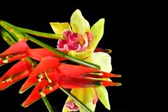 Beautiful colorful exotic flowers close up royalty free stock photo
