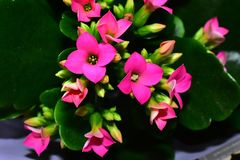 Beautiful colorful flowers close up in the sunshine royalty free stock photo