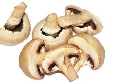 Beautiful colorful mushrooms close up stock images