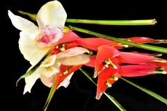 Beautiful colorful orchid close up on the mirror stock images