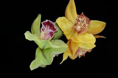 Beautiful colorful orchid on the mirror royalty free stock photo