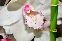 Beautiful colorful orchid close up in the sunshine royalty free stock images