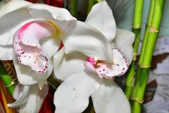 Beautiful colorful orchid close up in the sunshine royalty free stock image