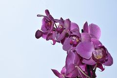 Beautiful orchid close up in my room Stock Photos