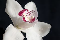 Very pretty colorful orchid close up Stock Photos