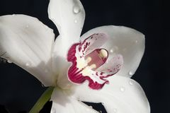 Very pretty colorful orchid close up Royalty Free Stock Photo