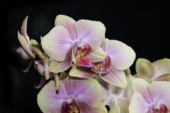 Very pretty colorful orchid close up Stock Images