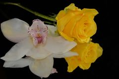 Beautiful colorful orchid with rose on the mirror stock photos
