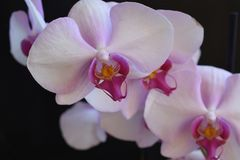 Beautiful orchids close up in my garden Stock Image
