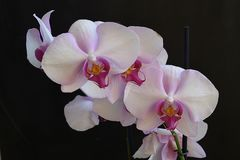 Beautiful orchids close up in my garden Royalty Free Stock Photo