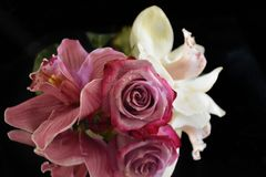 Beautiful colorful orchids and rose close up on the mirror royalty free stock photos