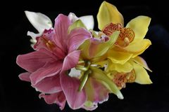 Beautiful rose with orchids close up on the mirror royalty free stock images
