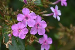 Beautiful colorful summer flower in my garden stock photos